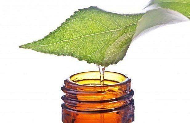 Çay Ağacı Yağının Faydaları Nelerdir?