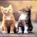 kedi ne ile beslenmeli