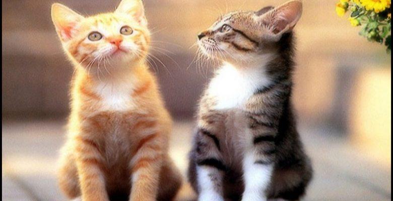 Kediler Ne ile Beslenmeli?