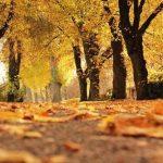 Sonbahar Fotoğrafları